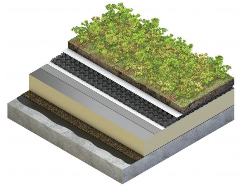 This is an image of an extensive green roof